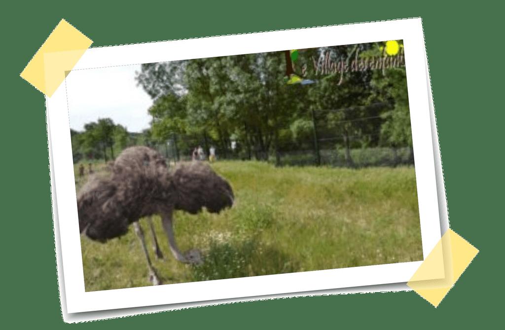 Parc d'attraction Saint-Florent-sur-Auzonnet